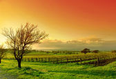 Vineyard Landscape — Foto Stock
