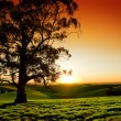 Rural Sunset - Stock Photo