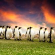 Stock Photo: March of the Penguins