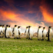 März der penguins — Stockfoto