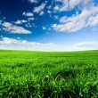 Green Meadow — Foto de Stock