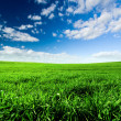 Green Meadow — Stockfoto