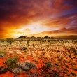 Sunset Desert Beauty - Stockfoto