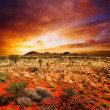 Sunset Desert Beauty - Stock Photo