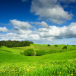 Green Field — Stock Photo #5204214