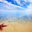 Starfish Paradise — Stock Photo