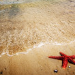 Starfish on Sand — Stock fotografie