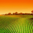 Vineyard Hills Sunrise - Stock Photo