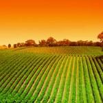 Vineyard Hills Sunrise — Stock Photo
