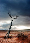 Dead Tree Desert — Stock Photo