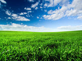 Green Meadow — Foto Stock