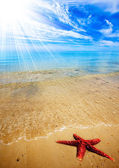 Starfish Beach — Stock Photo