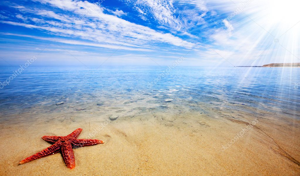 Sun rays shine on beautiful red starfish — Stock Photo #5204245
