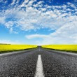 Canola Road — Stock Photo