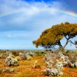 Rainbow Glory - Stock Photo