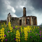 Floral Ruins — Stock Photo