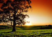 Rural Sunset — Stockfoto