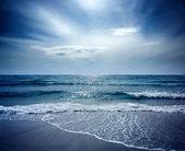 Sealion Seascape — Stock Photo