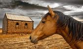 Rural Living — Stock Photo