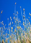 Summer Grasses — Stock Photo