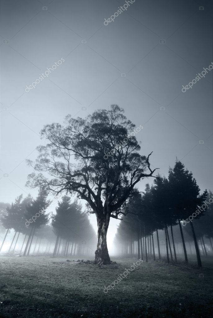 Misty morning in the forest — Stock Photo #5238786