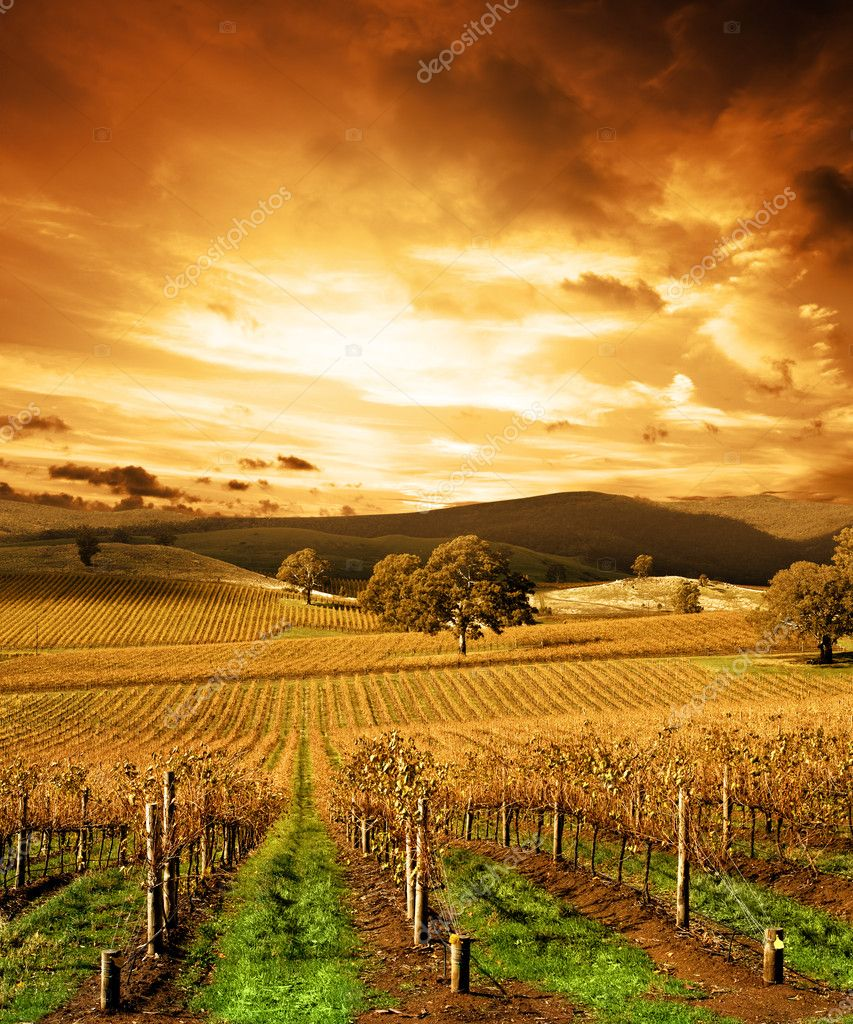 Autumn Sunset over vineyard — Stock Photo #5239031