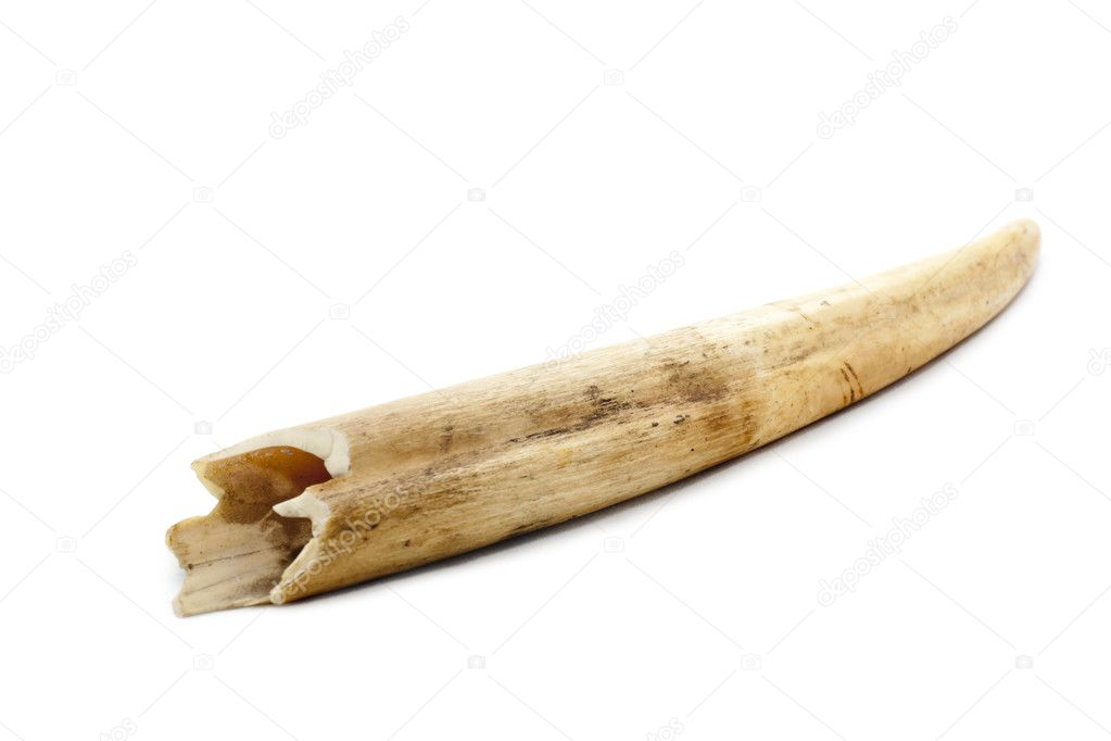An artificial bone isolated against white background — Stock Photo #4663682