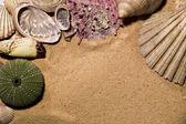 çerçeve çeşitli deniz kabuklarını yaptı — Stok fotoğraf