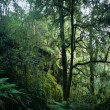 Rainforest — Stockfoto