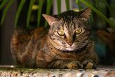 A cat with sharp eyesight — Stock Photo