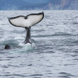 Killer whale tail - Stockfoto