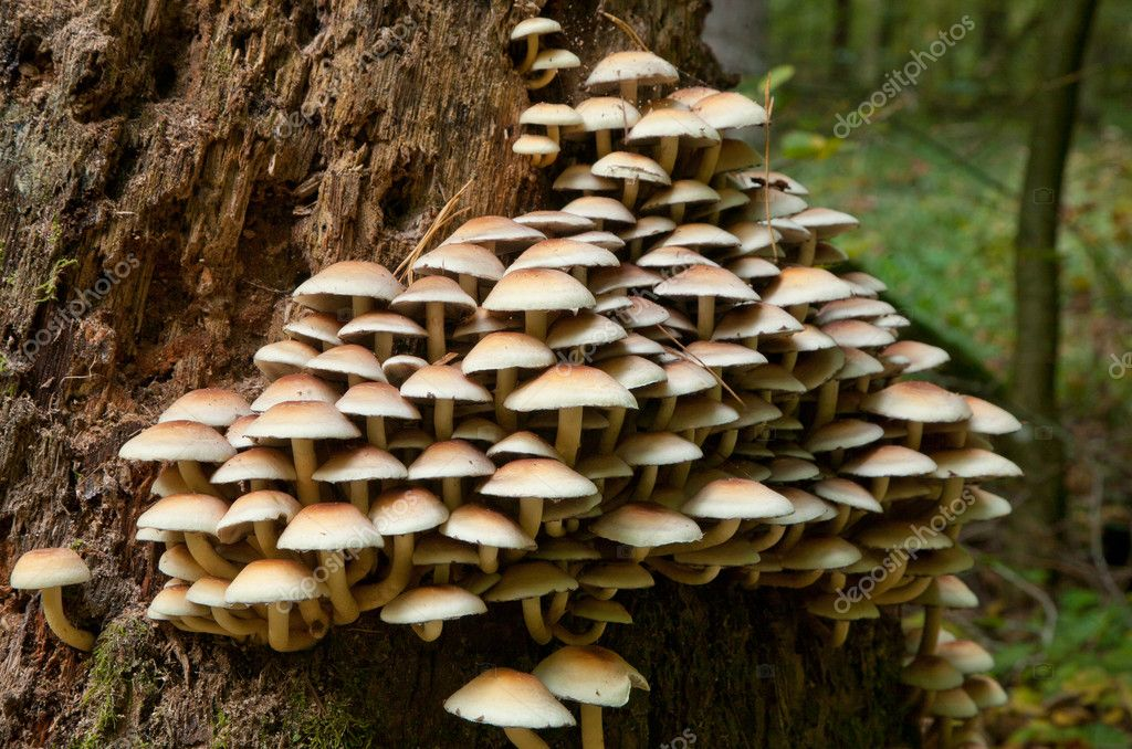 1000  images about Tree: Fungus on Pinterest | Trees, Ecology and ...