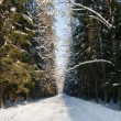 Snowy wide ground road crossing old mixed stand - Lizenzfreies Foto