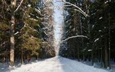 Snowy wide ground road crossing old mixed stand — Stock Photo