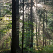 Stock Photo: Misty forest at morning