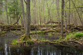 Springtime wet mixed forest with standing water — Stock Photo