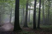 Oak and hornbeam trees against light of morning — Stock Photo