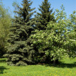Trees on lawn — Stock Photo #4543806