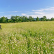 Stock Photo: Manager walking in a meadow, looking