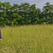 Foto Stock: Manager standing in a meadow, looking