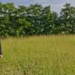Manager standing in a meadow, looking — Stockfoto