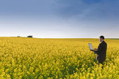 Manager in flowering rape field — Stock Photo