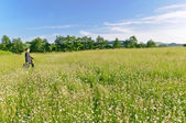 Manager walking in a meadow, looking — Stock Photo
