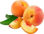 Two ripe vector peaches — Stock Vector