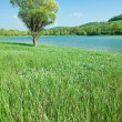 Mountain lake with green meadow - Lizenzfreies Foto