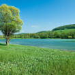 Mountain lake with on isolated tree — Foto Stock