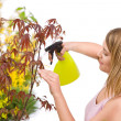 Gardening - woman sprinkling water to plant — Foto de Stock
