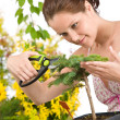 Gardening - woman cutting tree with pruning shears — Photo