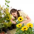 Gardening - woman cutting sunflowers and plants - Stock Photo