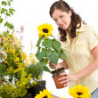 Gardening - woman holding flower pot with sunflower — Stock Photo